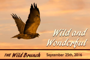 Wild and Wonderful_Air Blanca